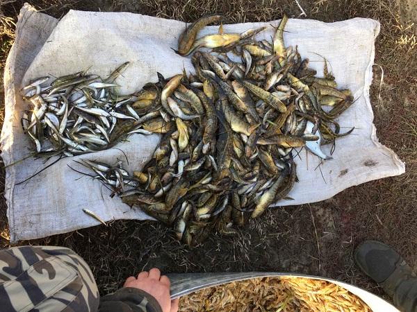 У Каркінітській затоці викрито порушення зі збитками на майже 32 тис. грн, - Чорноморське басейнове управління