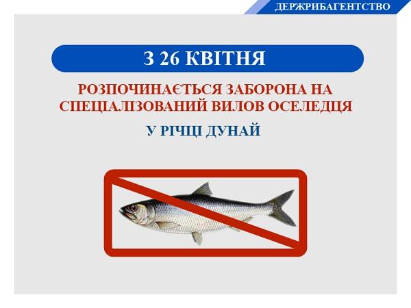 З 26 квітня стартує заборона на спеціалізований вилов оселедця в річці Дунай