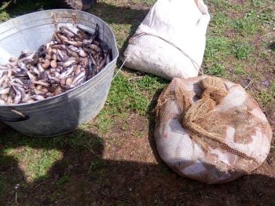 В Азовському морі порушники завдали збитків у розмірі 174 тис. грн