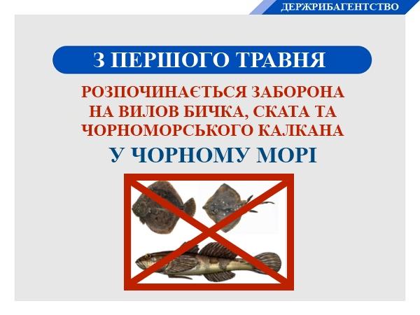 З 1 травня у Чорному морі заборонено вилов бичка, чорноморського калкана та ската