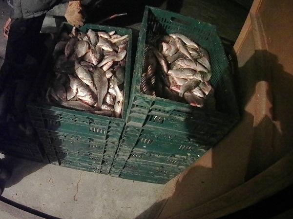 Кіровоградрибоохорона викрила рибалку з 257 кг риби на понад 166 тис. грн збитків