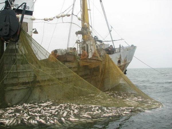 На 91% збільшився вилов водних біоресурсів у внутрішніх водоймах України