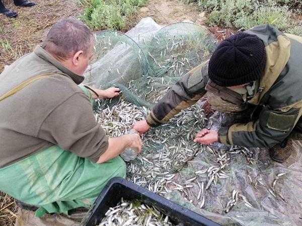 В акваторії Березанського лиману зафіксовано порушення зі збитками у розмірі 47 тис. грн, - рибоохоронний патруль Миколаївщини