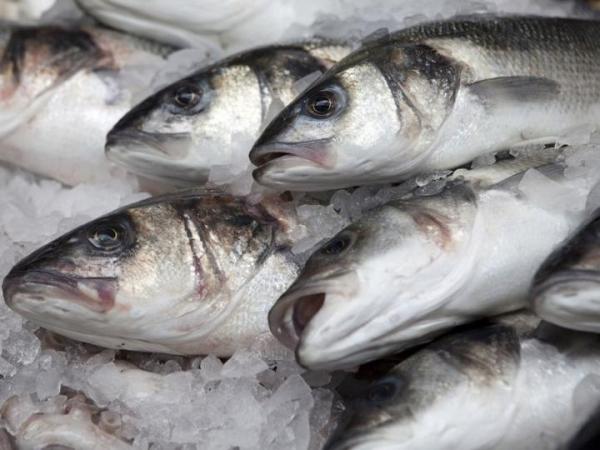 За три місяці 2019 року експортовано 119 тонн української мороженої риби