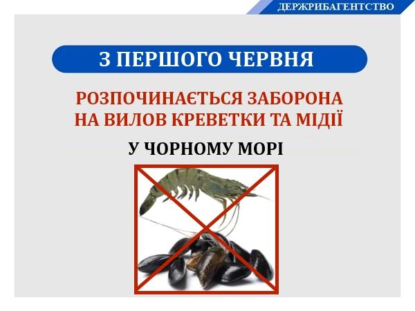 З початку червня у Чорному морі заборонено вилов креветки та мідії