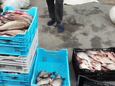 У Кременчуцькому водосховищі порушники виловили 122 кг риби на понад 82 тис. грн, - рибоохоронний патруль Полтавщини