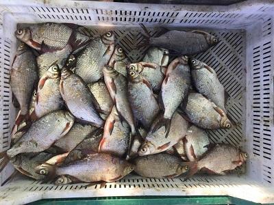 Управлінням оперативного реагування викрито порушників з 283 кг риби на 85 тис. грн збитків
