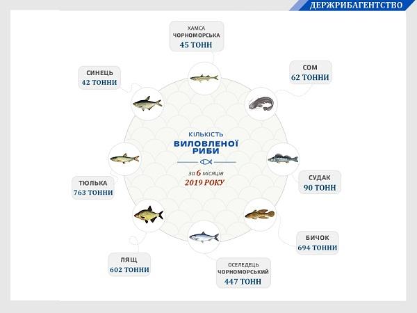 Вилов водних біоресурсів у Чорному морі збільшився на 84%