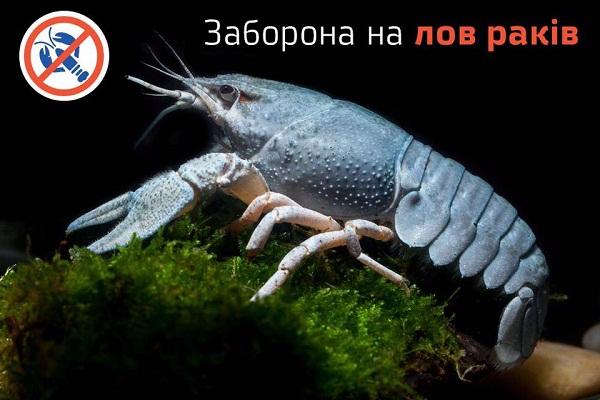 В українських водоймах розпочинається заборона на вилов раків у період їх другої линьки