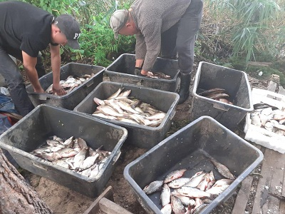 На Київському водосховищі промислові рибалки завдали збитків у розмірі 126 тис. грн, - рибоохоронний патруль Київщини