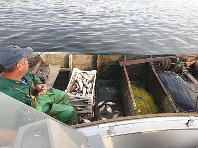 Черкаський рибоохоронний патруль викрив промисловика, який завдав 189 тис. грн збитків