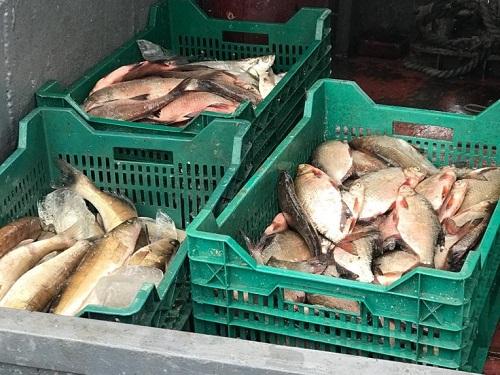 За два дні у промисловиків на Київському водосховищі вилучено 282 кг риби, - Управління оперативного реагування