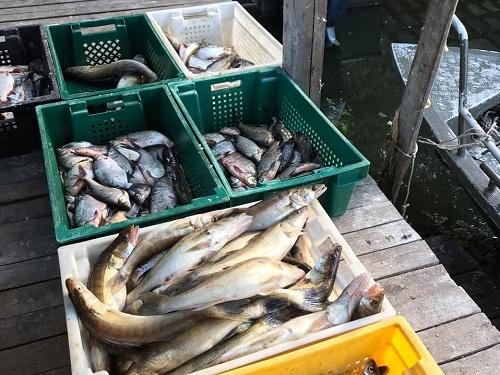 На Київському водосховищі промислові рибалки завдали збитків у розмірі 132 тис. грн, - Управління оперативного реагування