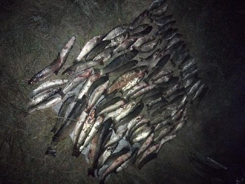 На озері Сиваш порушники завдали 226 тис. грн збитків, - Азовське басейнове управління
