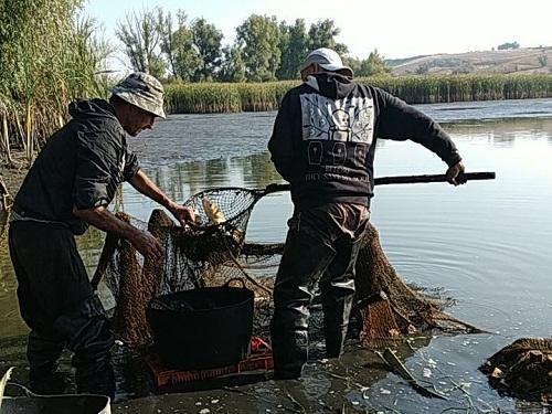 Шляхом спускання води порушник виловив 137 кг риби на 46 тис. грн збитків, - рибоохоронний патруль Черкащини
