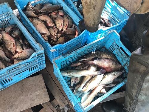 На річці Дніпро викрито промислового рибалку з 80 кг риби на 19 тис. грн збитків, - Управління оперативного реагування