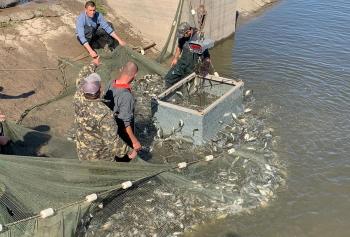 За три дні в трьох областях у водойми вселили понад 2,5 млн молоді риби