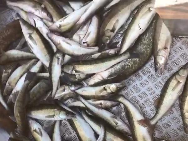 На Київському водосховищі порушники завдали понад 25 тис. грн збитків, - рибоохоронний патруль Київщини