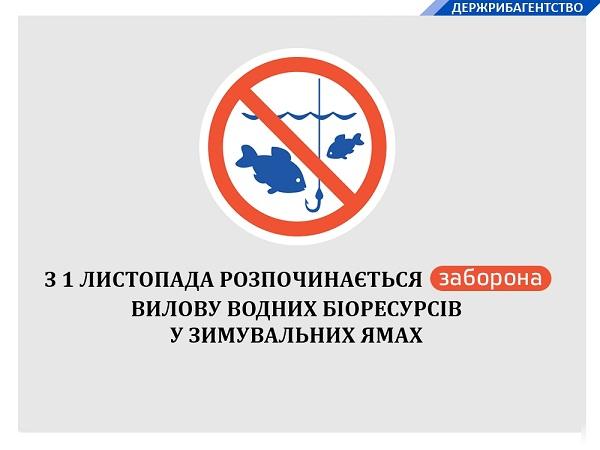 З початку листопада встановлюється заборона на вилов риби у зимувальних ямах, - Держрибагентство