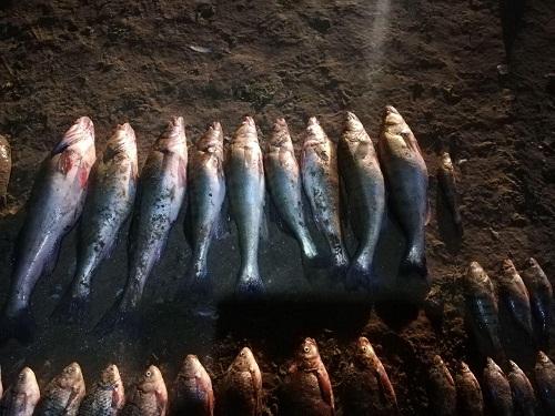 На Дністровському водосховищі затримано колишнього держінспектора, який завдав понад 26 тис. грн збитків, - рибоохоронний патруль Буковини