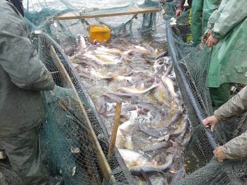 Фахівцями ОдЦ ПівденНІРО розпочато науково-дослідні роботи на озері Китай