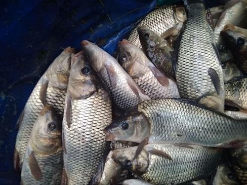 У водойми Херсонщини вселено понад 13 тонн щуки, коропа та рослиноїдних видів риби