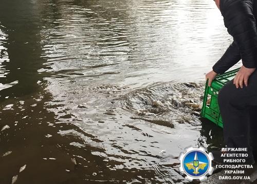 В Луцьку у річку Стир рибалки-любителі випустили 1 420 кг цінних видів риби