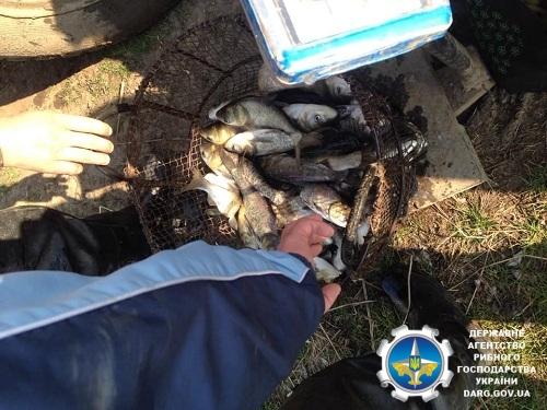 У Клекотинське водосховище випустили 1 200 кг риби