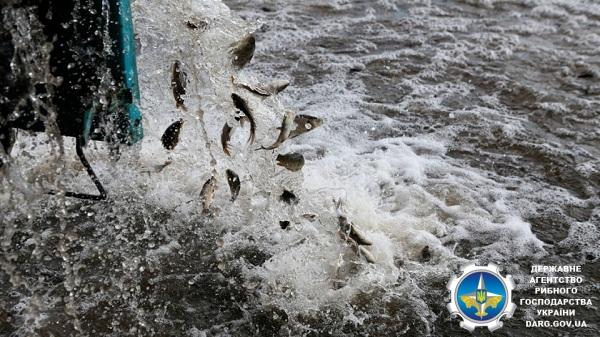 Водойми Кіровоградської області зарибили 1 500 кг рослиноїдних видів риб та коропа