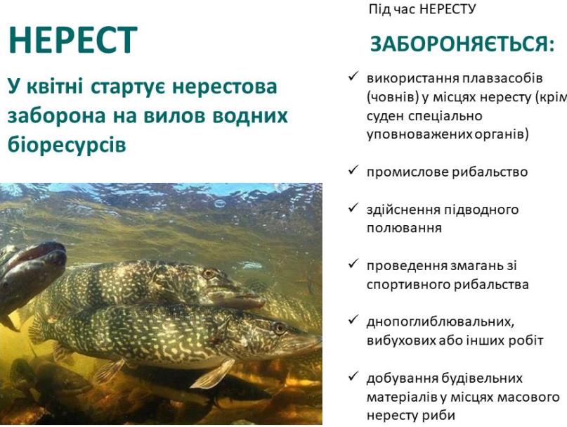 Увага! У квітні стартує нерестова заборона на вилов водних біоресурсів.