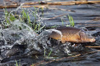 У 2015 році вилов у водоймах України збільшився на 17,7%
