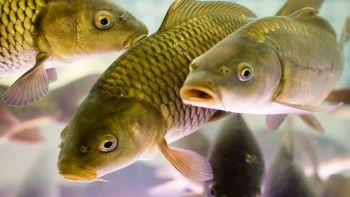 Чи буде риба в українських водоймах залежить від кожного  з  нас, - Ярема Ковалів