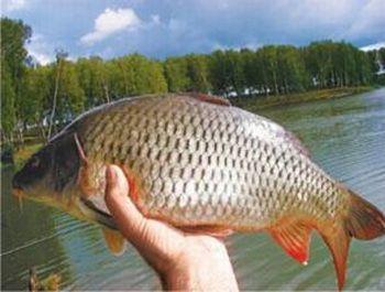 Обсяги вилову риби  за січень - вересень  2014 року