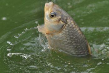 Щодо затвердження режимів рибальства у 2015 році