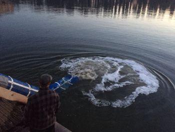 У водойми Кіровоградщини вселено більше 10 тонн малька