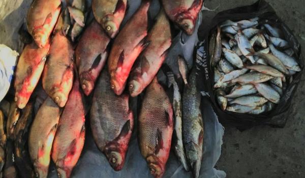 Харківські рибпатрульні виявили 7 порушень за два дні роботи