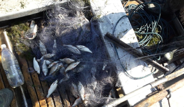 За тиждень виявлено 24 порушення правил рибальства, - Чернівецький рибоохоронний патруль