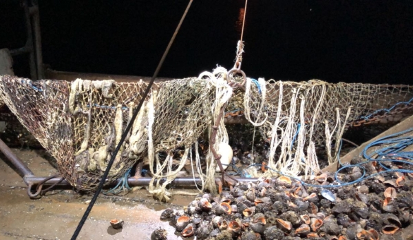 Збитки у розмірі близько 1,6 млн грн зафіксовано Управлінням оперативного реагування спільно з Чорноморським рибоохоронним патрулем