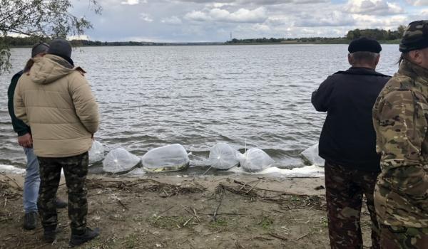 У водойми Кіровоградщини випустили 16 тис. екз. стерляді