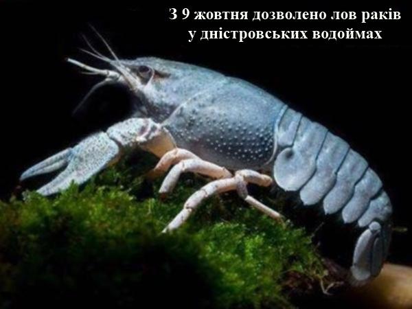 У дністровських водоймах дозволено ловити раків