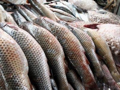 На 12% збільшилось в Україні споживання риби та рибних продуктів