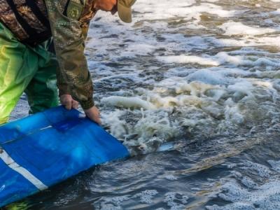 У річку Дніпро випустили близько 45 тонн мальків риби, - Дніпропетровський рибоохоронний патруль