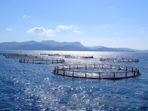 Світове виробництво в умовах аквакультури сягнуло $243,5 млрд