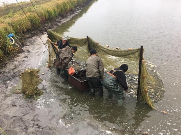 У Кременчуцьке водосховище випустили понад 74 тонни риби