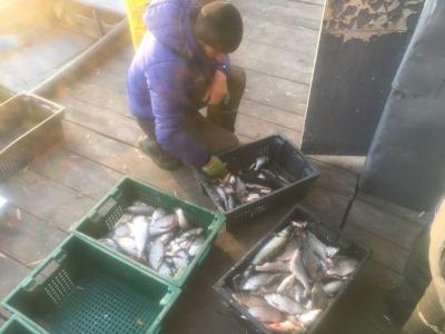 Київський рибоохоронний патруль виявив два порушення зі збитками на 147 тис. грн