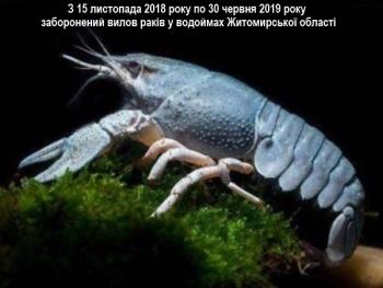 З 15 листопада на Житомирщині заборонено ловити раків
