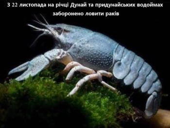 На річці Дунай та придунайських водоймах заборонено ловити раків, - Одеський рибоохоронний патруль