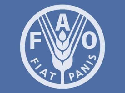 160-та сесія комісії ФАО обговорила питання продовольчої безпеки і сталого розвитку сільського господарства