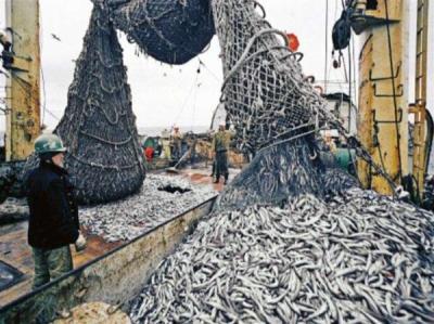 На 64% збільшився вилов водних біоресурсів у Чорному морі