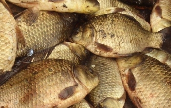 На Одещині затримано порушників, що завдали збитків рибному господарству на понад 105 тис грн